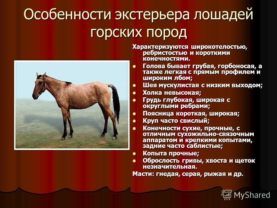 Особенности экстерьера лошадей горских пород Характеризуются широкотелостью, ребристостью и короткими конечностями. Голова бывает грубая, горбоносая, а также легкая с прямым профилем и широким лбом; Голова бывает грубая, горбоносая, а также легкая с