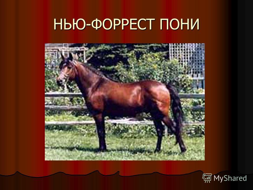НЬЮ-ФОРРЕСТ ПОНИ