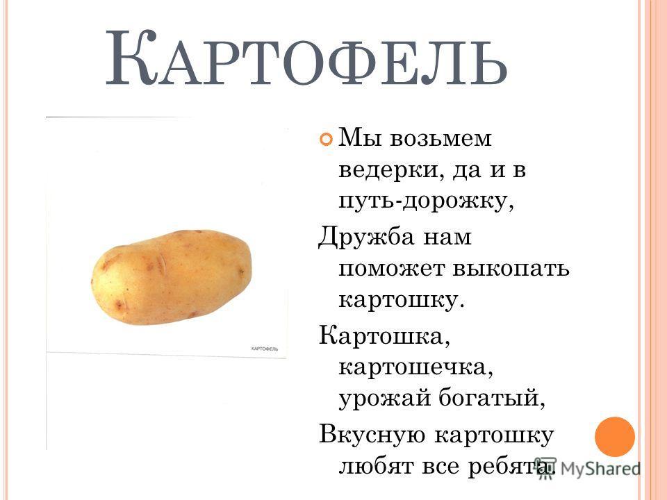 К АРТОФЕЛЬ Мы возьмем ведерки, да и в путь-дорожку, Дружба нам поможет выкопать картошку. Картошка, картошечка, урожай богатый, Вкусную картошку любят все ребята.