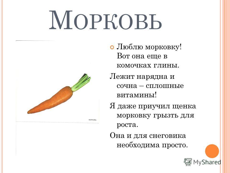 М ОРКОВЬ Люблю морковку! Вот она еще в комочках глины. Лежит нарядна и сочна – сплошные витамины! Я даже приучил щенка морковку грызть для роста. Она и для снеговика необходима просто.