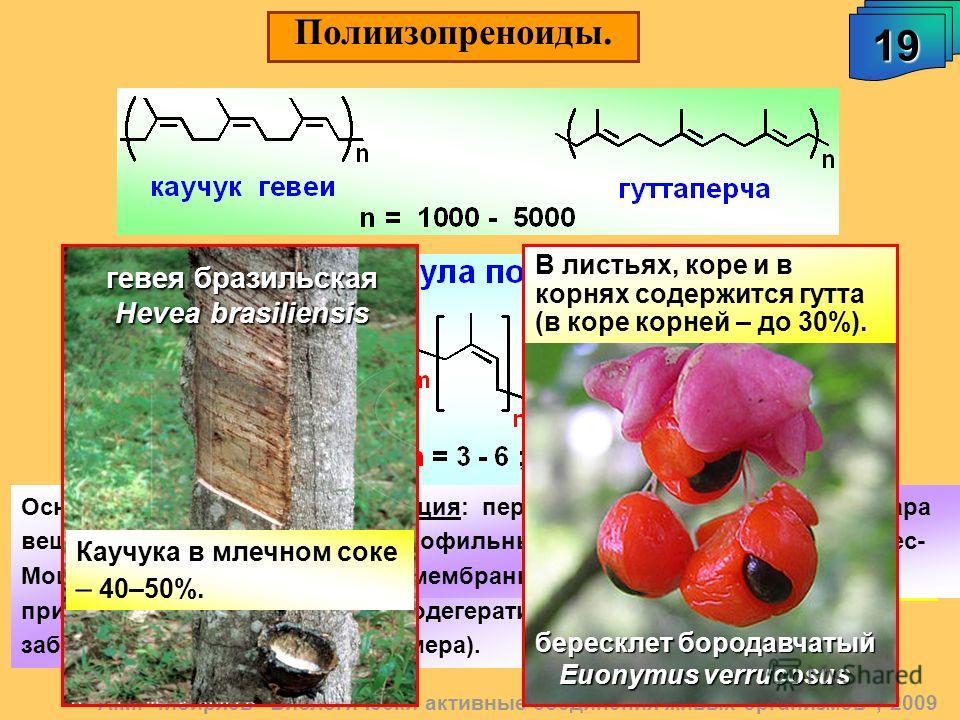Полиизопреноиды. 19191919 А.М. Чибиряев