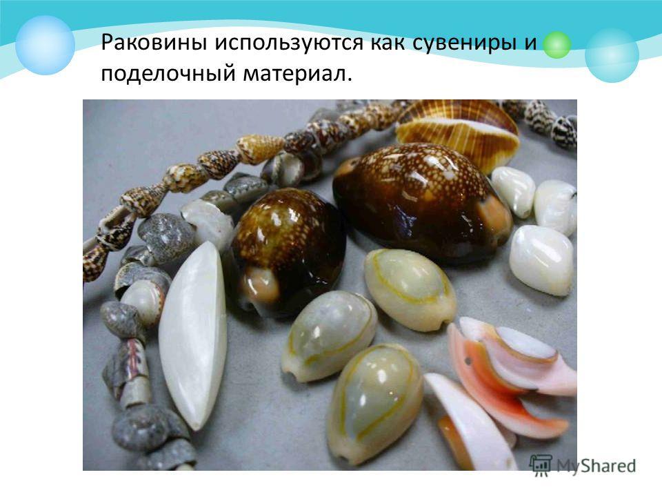 Раковины используются как сувениры и поделочный материал.