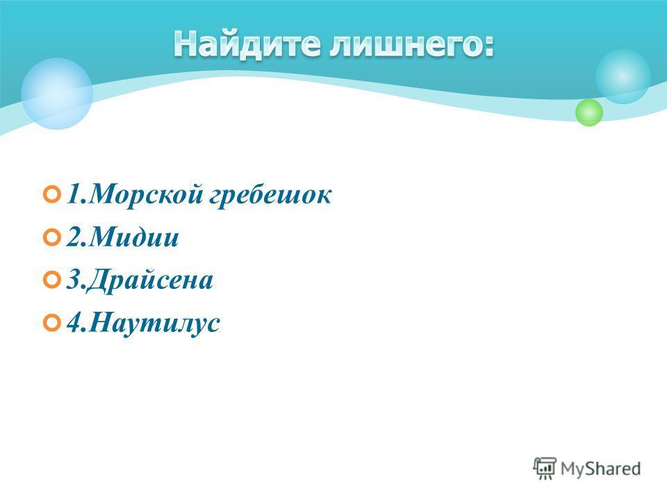 1.Морской гребешок 2.Мидии 3.Драйсена 4.Наутилус