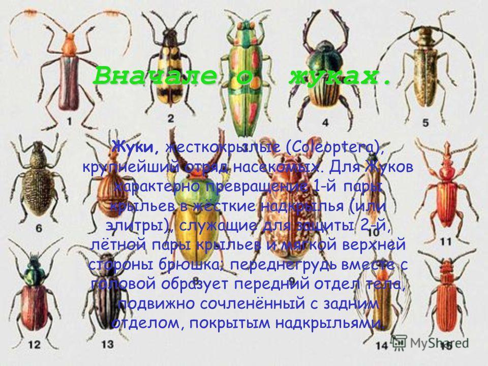 Жук Плавунец. Или Dytiscidae