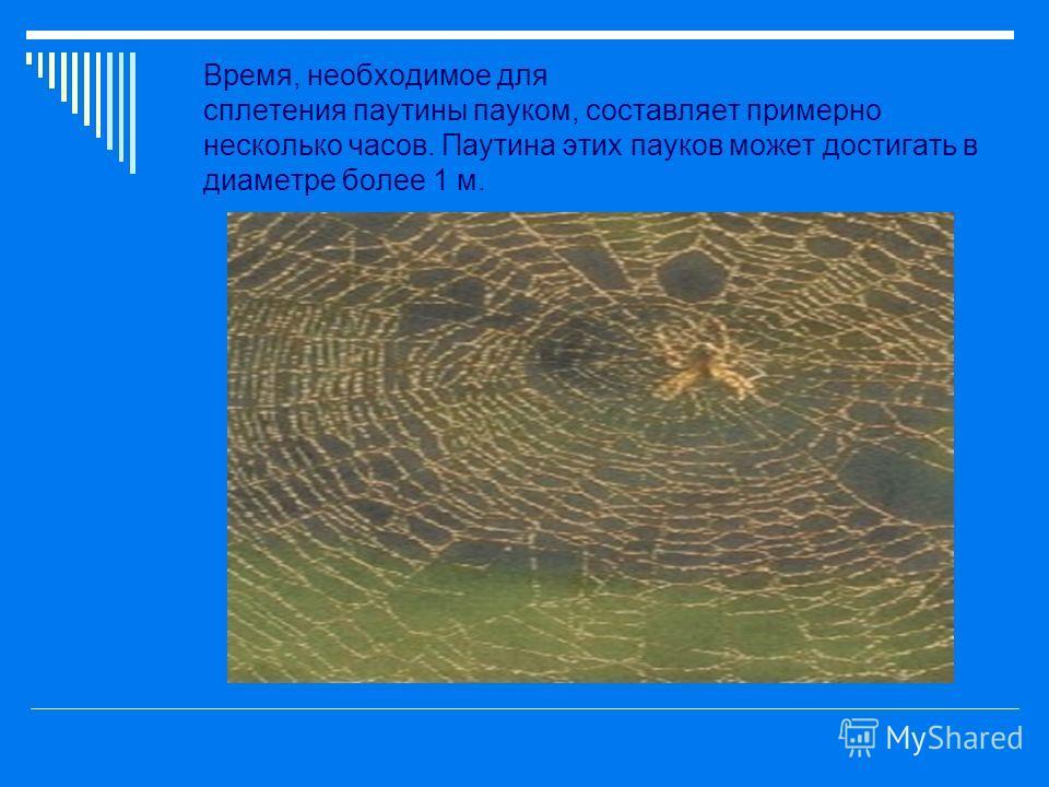 Время, необходимое для сплетения паутины пауком, составляет примерно несколько часов. Паутина этих пауков может достигать в диаметре более 1 м.