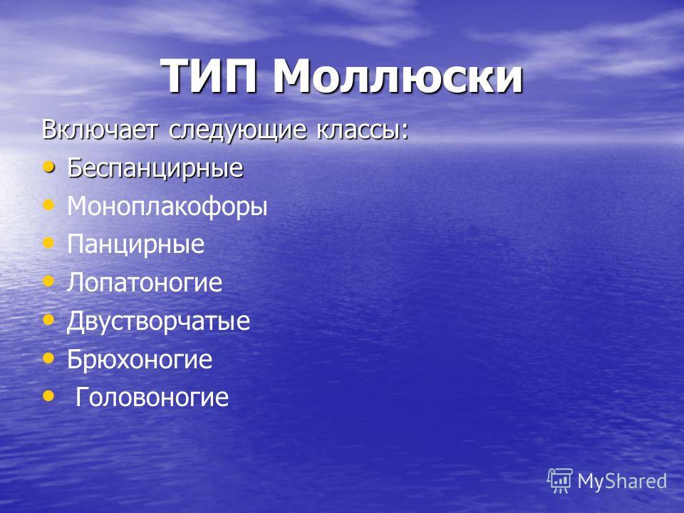 ТИП Моллюски Включает следующие классы: Беспанцирные Беспанцирные Моноплакофоры Панцирные Лопатоногие Двустворчатые Брюхоногие Головоногие