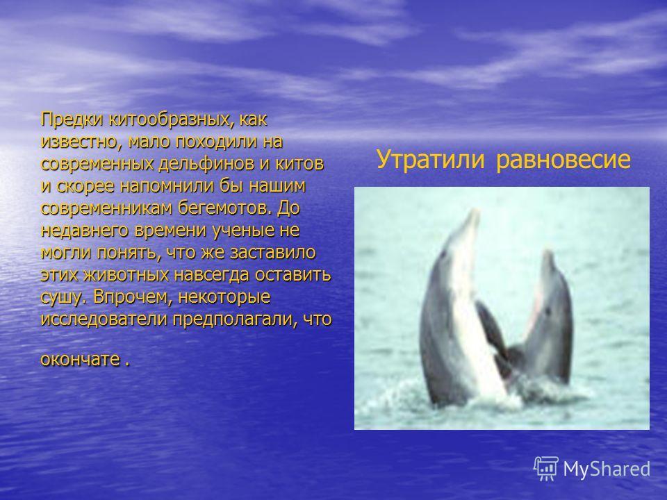 Предки китообразных, как известно, мало походили на современных дельфинов и китов и скорее напомнили бы нашим современникам бегемотов. До недавнего времени ученые не могли понять, что же заставило этих животных навсегда оставить сушу. Впрочем, некото