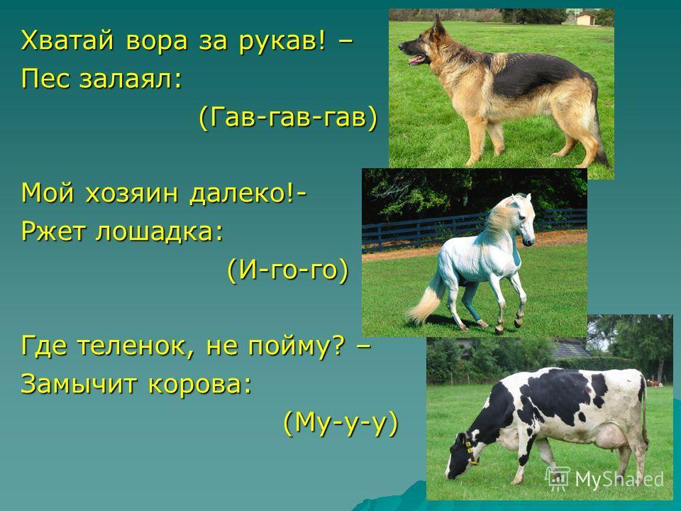 Хватай вора за рукав! – Пес залаял: (Гав-гав-гав) (Гав-гав-гав) Мой хозяин далеко!- Ржет лошадка: (И-го-го) (И-го-го) Где теленок, не пойму? – Замычит корова: (Му-у-у) (Му-у-у)