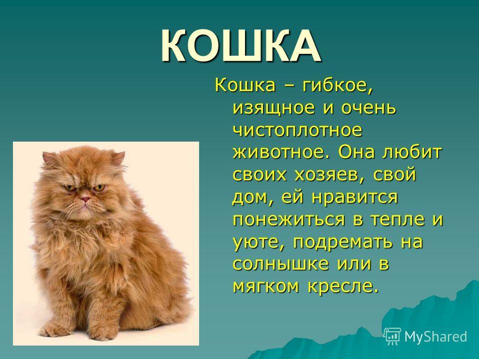 КОШКА Кошка – гибкое, изящное и очень чистоплотное животное. Она любит своих хозяев, свой дом, ей нравится понежиться в тепле и уюте, подремать на солнышке или в мягком кресле.