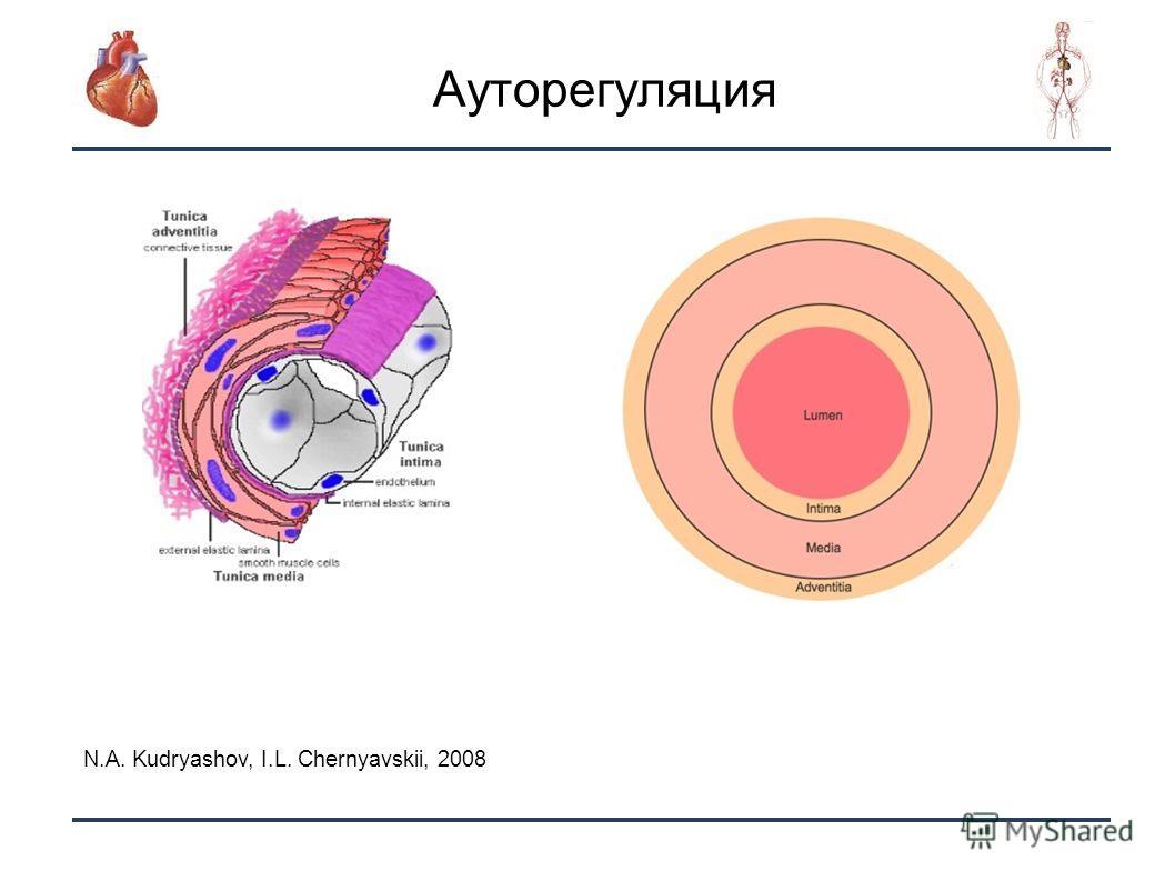 11 Ауторегуляция N.A. Kudryashov, I.L. Chernyavskii, 2008