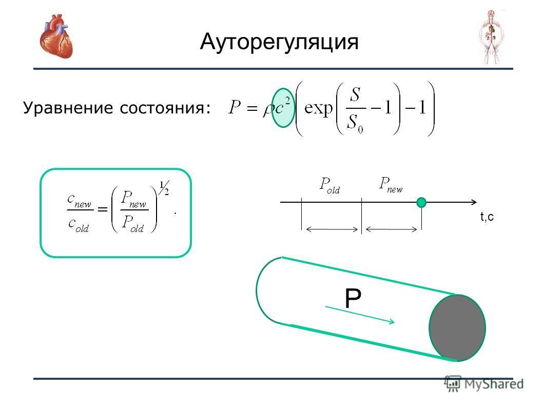 12 Уравнение состояния: t P T T Ауторегуляция t,c