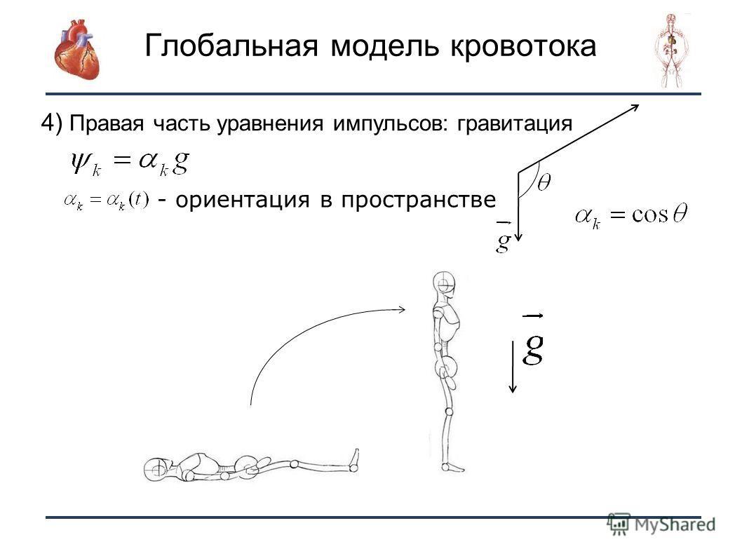 6 Глобальная модель кровотока Ориентация сосуда - ориентация в пространстве 4) Правая часть уравнения импульсов: гравитация
