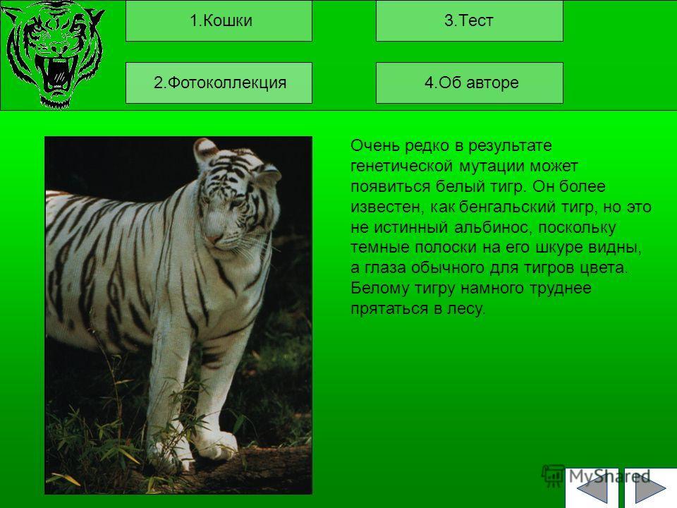 1.Кошки3.Тест Очень редко в результате генетической мутации может появиться белый тигр. Он более известен, как бенгальский тигр, но это не истинный альбинос, поскольку темные полоски на его шкуре видны, а глаза обычного для тигров цвета. Белому тигру