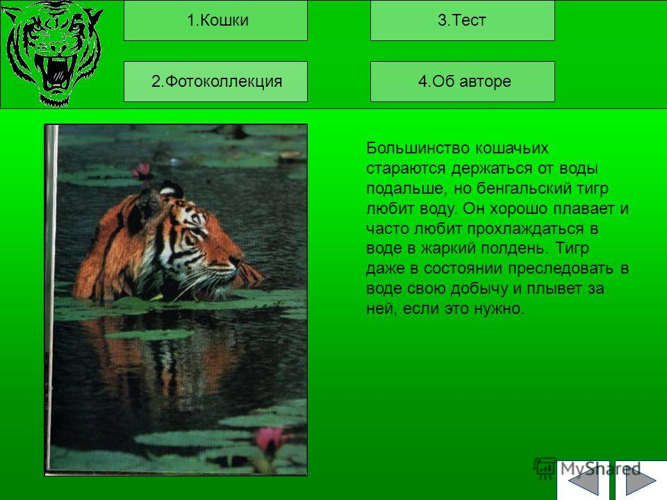 1.Кошки3.Тест Большинство кошачьих стараются держаться от воды подальше, но бенгальский тигр любит воду. Он хорошо плавает и часто любит прохлаждаться в воде в жаркий полдень. Тигр даже в состоянии преследовать в воде свою добычу и плывет за ней, есл
