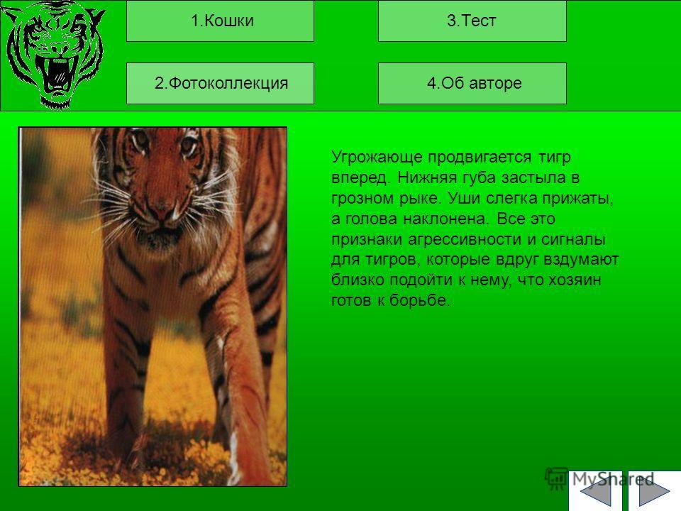1.Кошки3.Тест Угрожающе продвигается тигр вперед. Нижняя губа застыла в грозном рыке. Уши слегка прижаты, а голова наклонена. Все это признаки агрессивности и сигналы для тигров, которые вдруг вздумают близко подойти к нему, что хозяин готов к борьбе