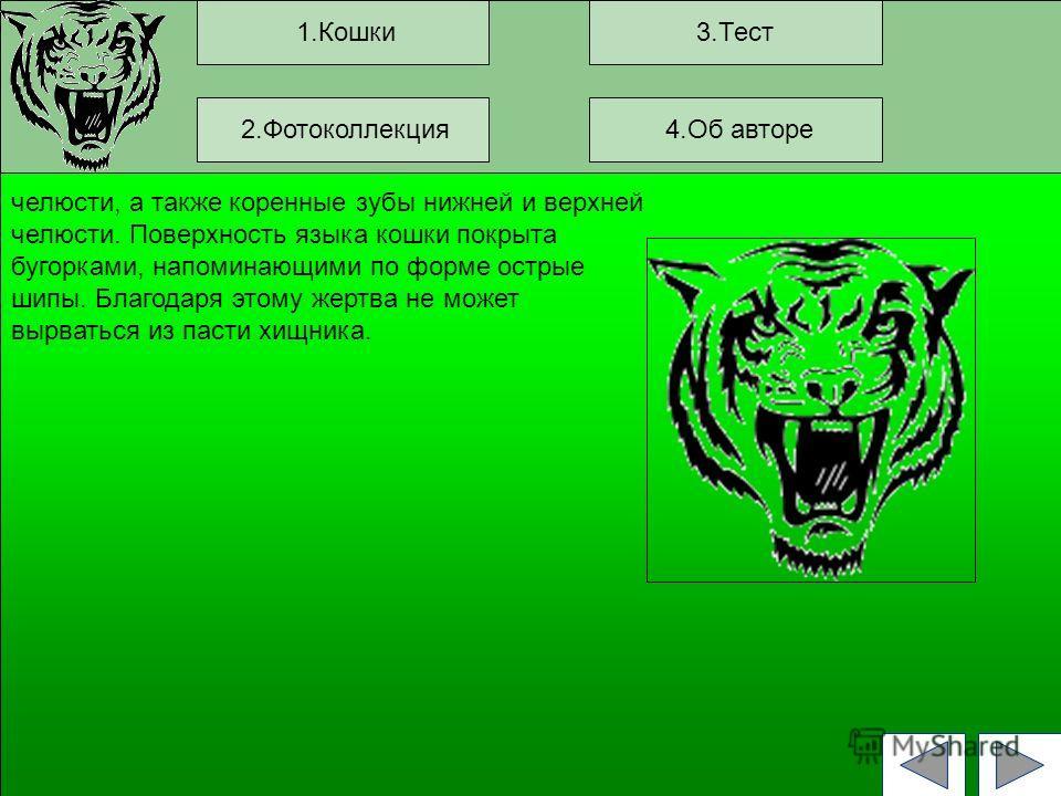 1.Кошки3.Тест челюсти, а также коренные зубы нижней и верхней челюсти. Поверхность языка кошки покрыта бугорками, напоминающими по форме острые шипы. Благодаря этому жертва не может вырваться из пасти хищника. 2.Фотоколлекция 4.Об авторе