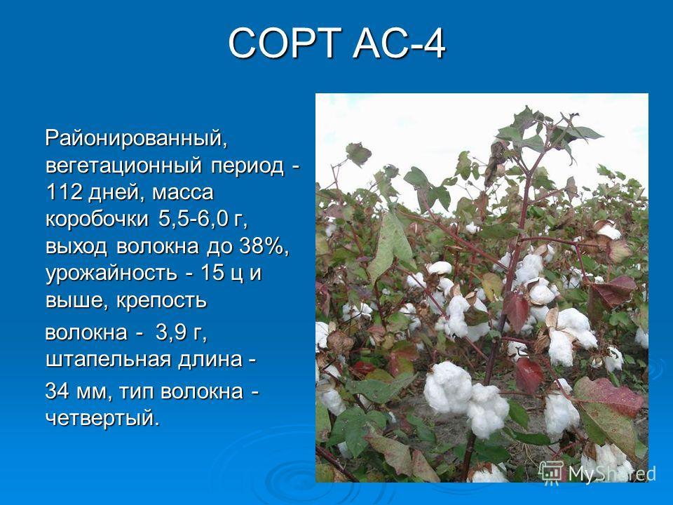 СОРТ АС-4 Районированный, вегетационный период - 112 дней, масса коробочки 5,5-6,0 г, выход волокна до 38%, урожайность - 15 ц и выше, крепость Районированный, вегетационный период - 112 дней, масса коробочки 5,5-6,0 г, выход волокна до 38%, урожайно
