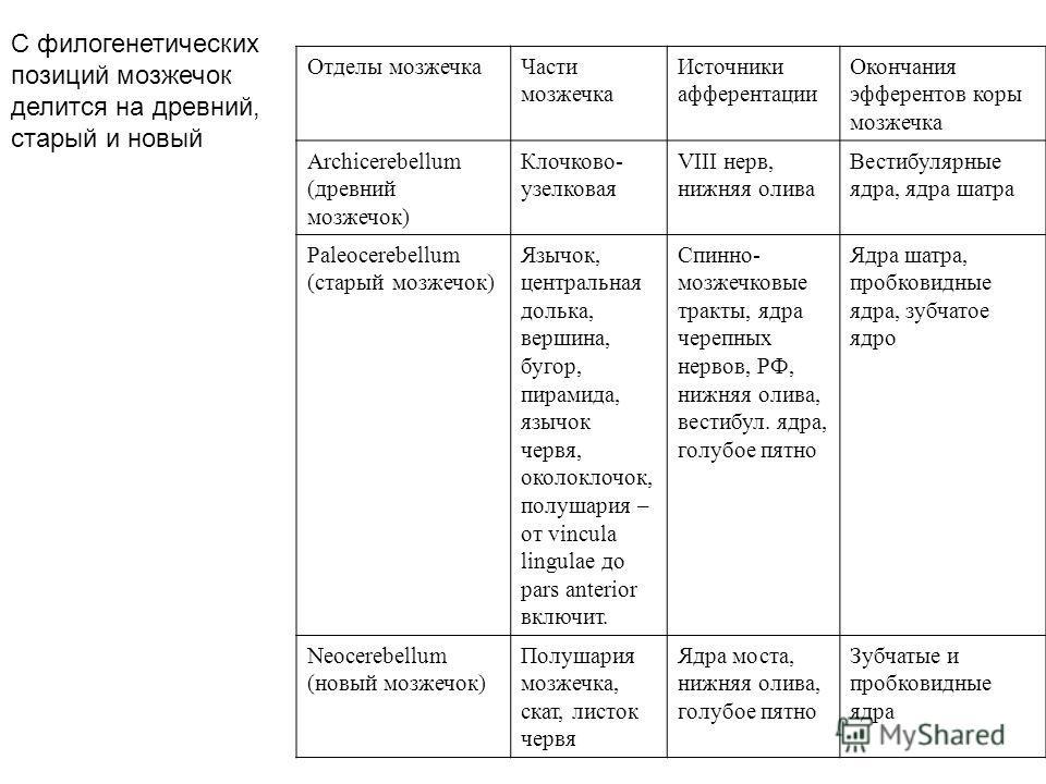 Отделы мозжечкаЧасти мозжечка Источники афферентации Окончания эфферентов коры мозжечка Archicerebellum (древний мозжечок) Клочково- узелковая VIII нерв, нижняя олива Вестибулярные ядра, ядра шатра Paleocerebellum (старый мозжечок) Язычок, центральна