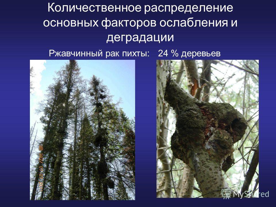 Количественное распределение основных факторов ослабления и деградации Ржавчинный рак пихты: 24 % деревьев