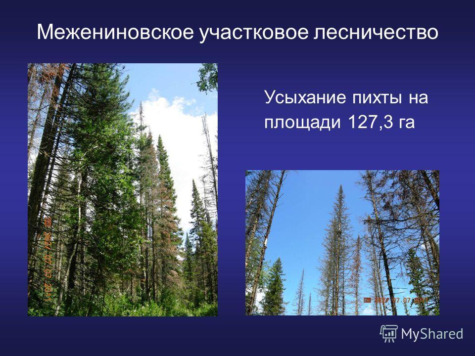 Межениновское участковое лесничество Усыхание пихты на площади 127,3 га