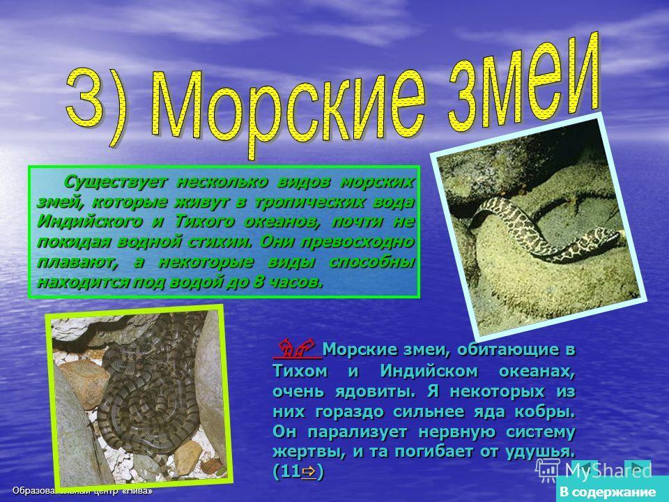 Образовательный центр «Нива» Существует несколько видов морских змей, которые живут в тропических вода Индийского и Тихого океанов, почти не покидая водной стихии. Они превосходно плавают, а некоторые виды способны находится под водой до 8 часов. Мор