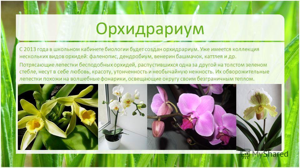 Орхидрариум С 2013 года в школьном кабинете биологии будет создан орхидрариум. Уже имеется коллекция нескольких видов орхидей: фаленопис, дендробиум, венерин башмачок, каттлея и др. Потрясающие лепестки бесподобных орхидей, распустившихся одна за дру
