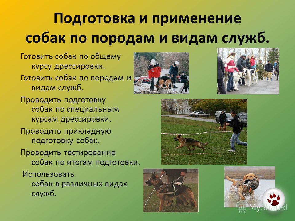 Подготовка и применение собак по породам и видам служб. Готовить собак по общему курсу дрессировки. Готовить собак по породам и видам служб. Проводить подготовку собак по специальным курсам дрессировки. Проводить прикладную подготовку собак. Проводит