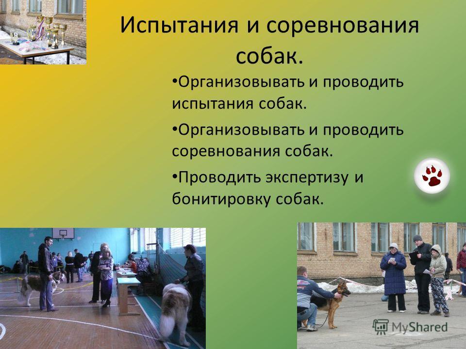 Испытания и соревнования собак. Организовывать и проводить испытания собак. Организовывать и проводить соревнования собак. Проводить экспертизу и бонитировку собак.