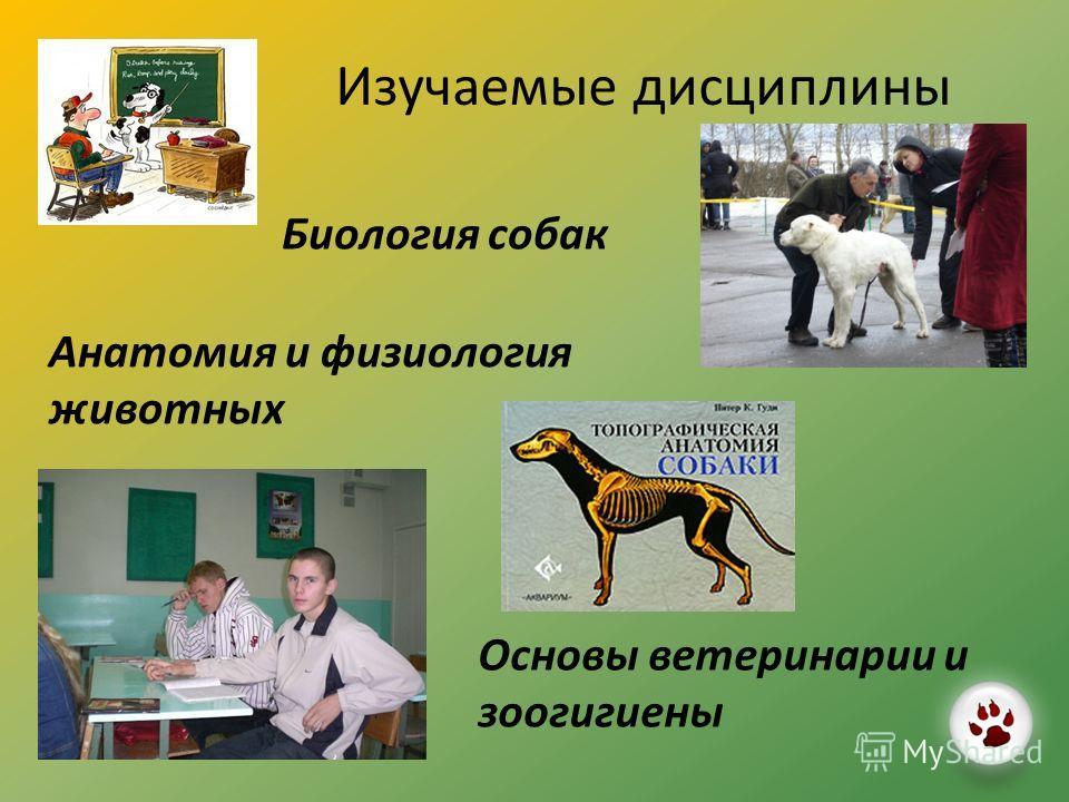 Изучаемые дисциплины Биология собак Анатомия и физиология животных Основы ветеринарии и зоогигиены