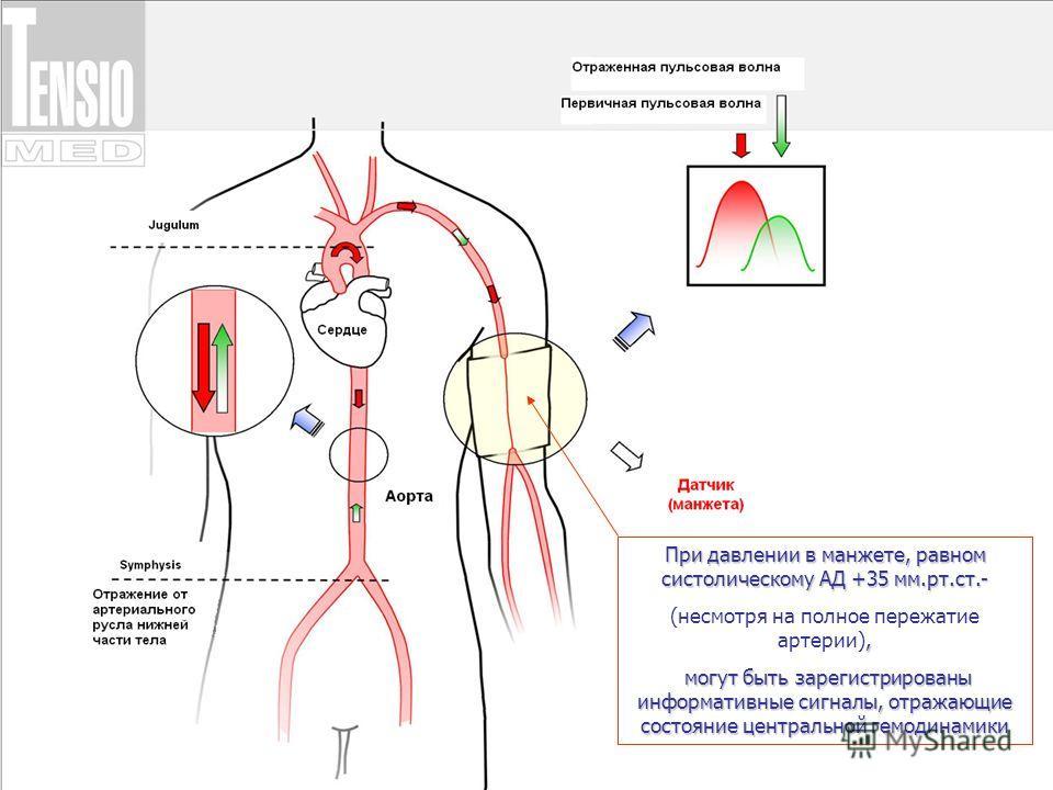 При давлении в манжете, равном систолическому АД +35 мм.рт.ст.-, (несмотря на полное пережатие артерии), могут быть зарегистрированы информативные сигналы, отражающие состояние центральной гемодинамики могут быть зарегистрированы информативные сигнал