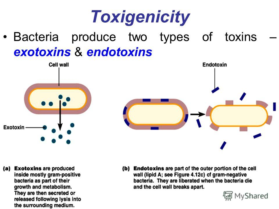 Toxigenicity Bacteria produce two types of toxins – exotoxins & endotoxins