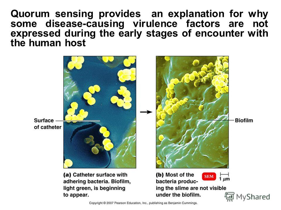 Quorum sensing provides an explanation for why some disease-causing virulence factors are not expressed during the early stages of encounter with the human host