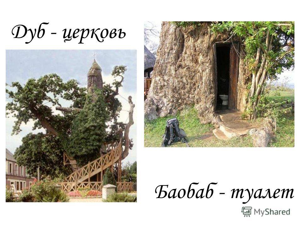 Дуб - церковь Баобаб - туалет