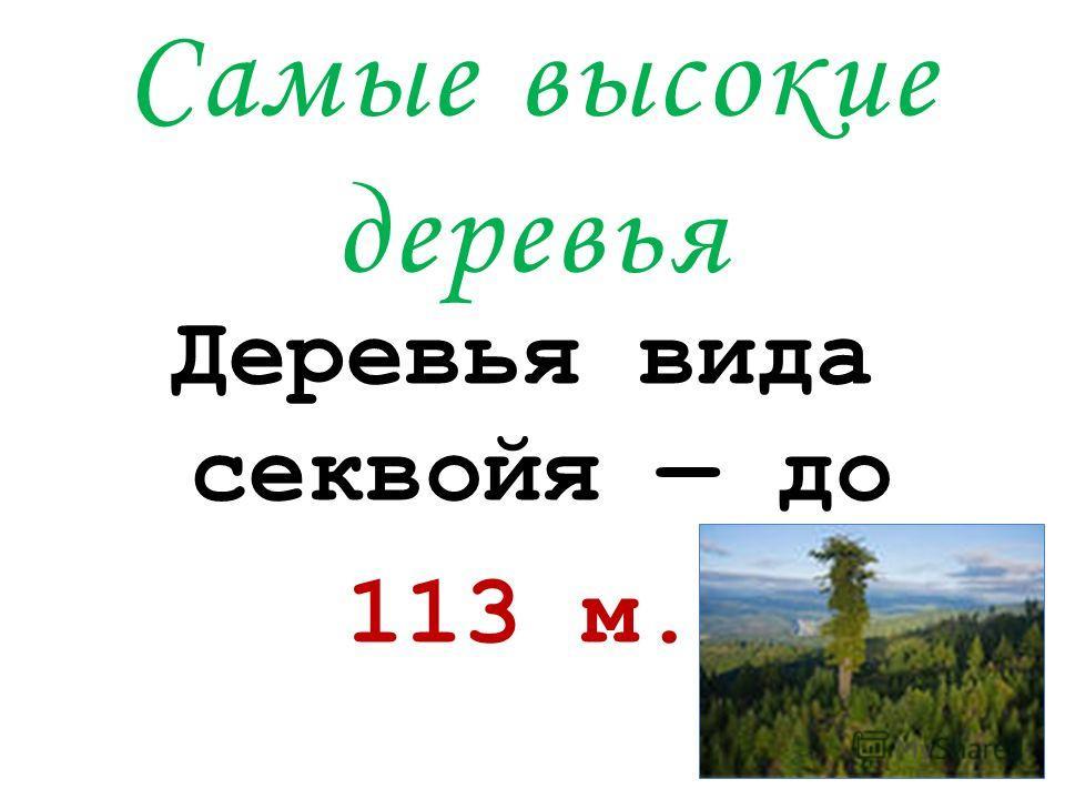 Самые высокие деревья Деревья вида секвойя до 113 м.