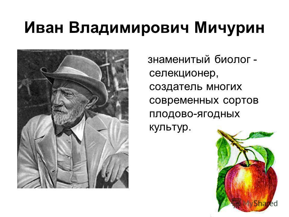 Иван Владимирович Мичурин знаменитый биолог - селекционер, создатель многих современных сортов плодово-ягодных культур.