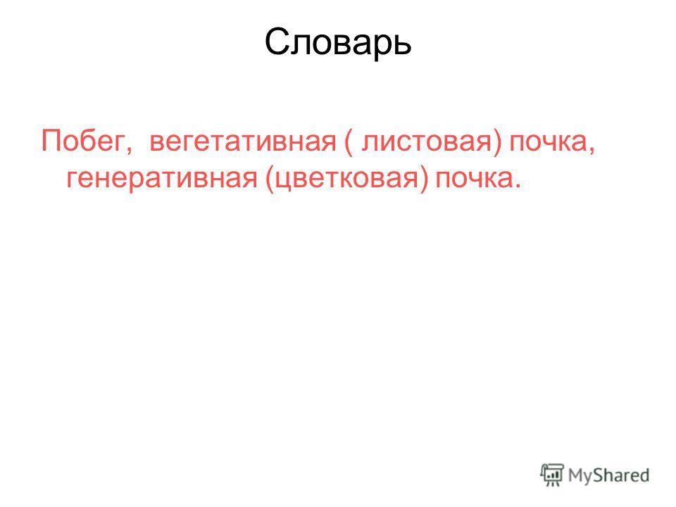 Словарь Побег, вегетативная ( листовая) почка, генеративная (цветковая) почка.