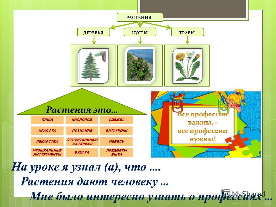 На уроке я узнал (а), что …. Растения дают человеку … Мне было интересно узнать о профессиях … РАСТЕНИЯ ДЕРЕВЬЯ КУСТЫТРАВЫ Растения это …