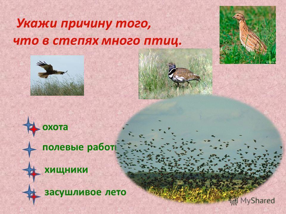 Укажи причину того, что в степях много птиц. охота полевые работы хищники засушливое лето