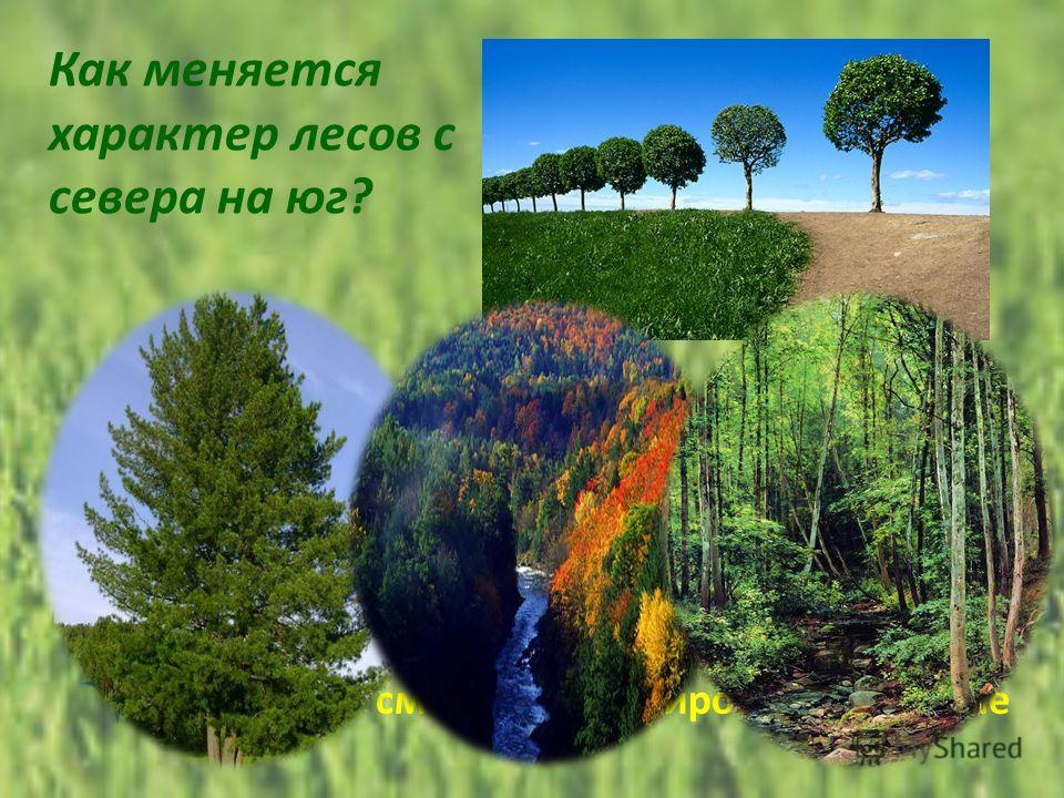 Как меняется характер лесов с севера на юг? хвойные- широколиственные- смешанные смешанные- хвойные- широколиственные широколиственные- хвойные-смешанные хвойные- смешанные- широколиственные