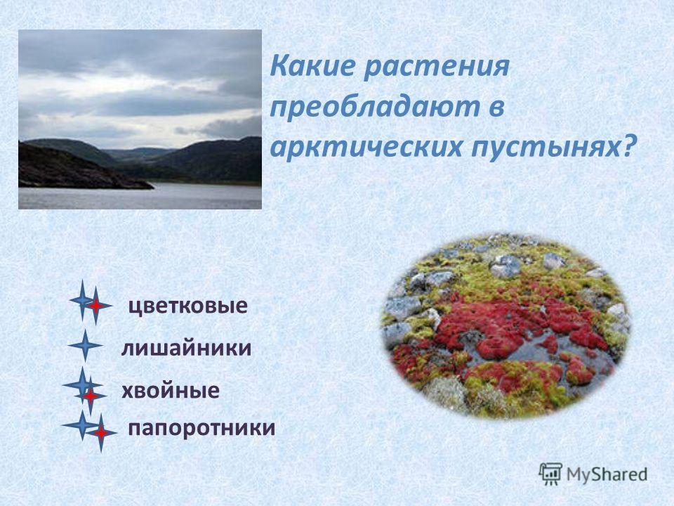Какие растения преобладают в арктических пустынях? цветковые лишайники хвойные папоротники