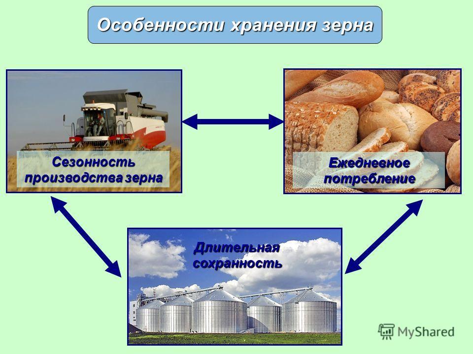 Особенности хранения зерна Сезонность производства зерна Ежедневное потребление Длительная сохранность
