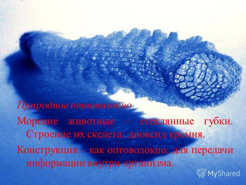 Природное оптоволокно Морские животные – стеклянные губки. Строение их скелета: диоксид кремня. Конструкция – как оптоволокно, для передачи информации внутри организма.