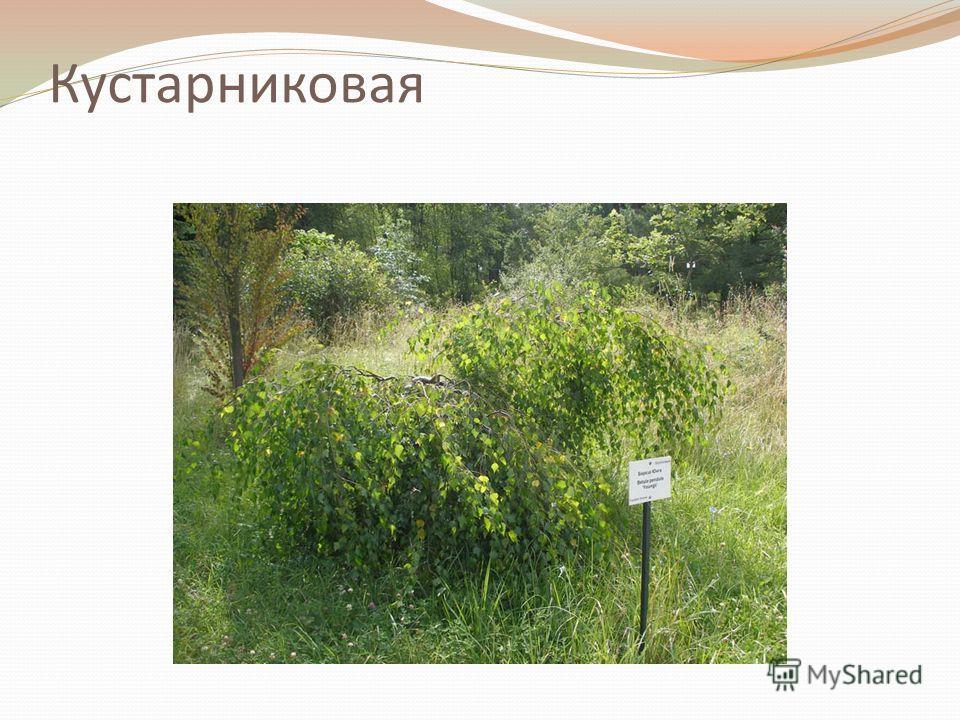 Кустарниковая
