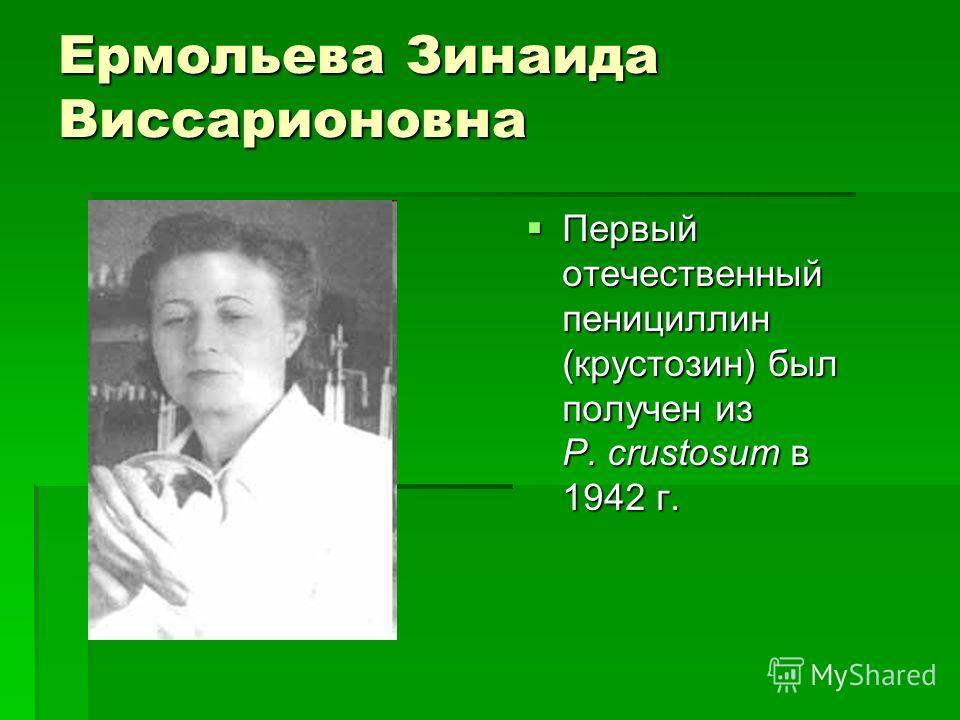 Ермольева Зинаида Виссарионовна Первый отечественный пенициллин (крустозин) был получен из P. crustosum в 1942 г. Первый отечественный пенициллин (крустозин) был получен из P. crustosum в 1942 г.