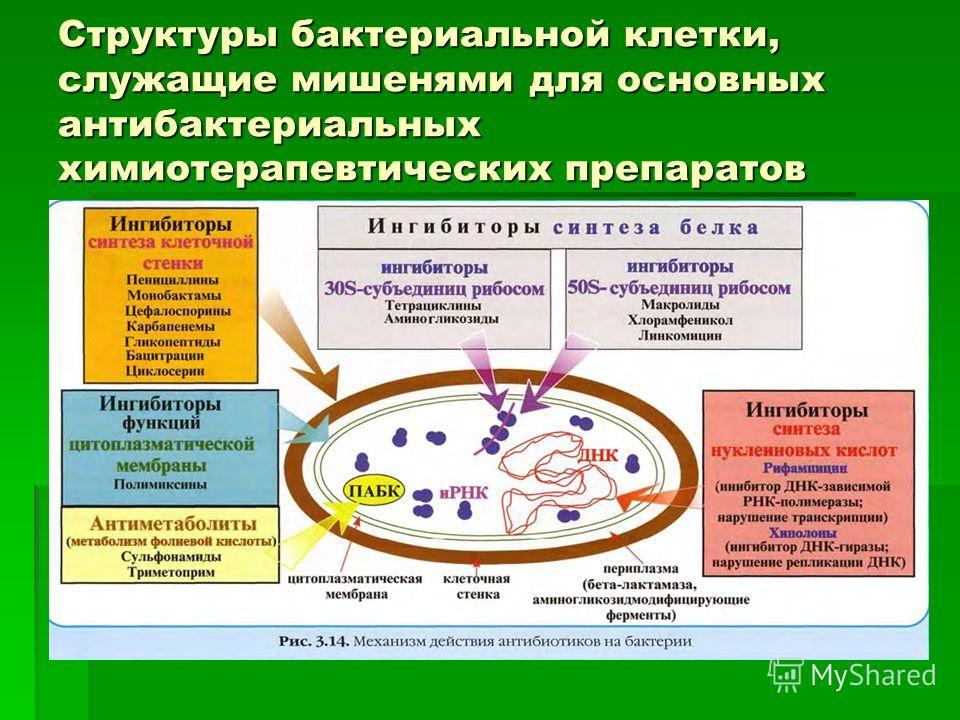 Структуры бактериальной клетки, служащие мишенями для основных антибактериальных химиотерапевтических препаратов