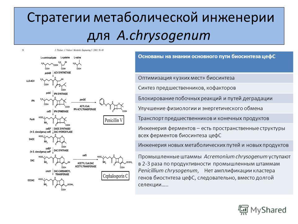 Стратегии метаболической инженерии для A.chrysogenum Основаны на знании основного пути биосинтеза цефС Оптимизация «узких мест» биосинтеза Синтез предшественников, кофакторов Блокирование побочных реакций и путей деградации Улучшение физиологии и эне