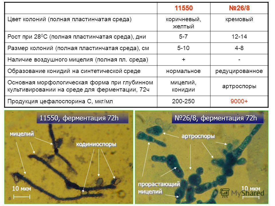 11550 26/8 Цвет колоний (полная пластинчатая среда)коричневый, желтый кремовый Рост при 28 0 С (полная пластинчатая среда), дни5-712-14 Размер колоний (полная пластинчатая среда), см5-104-8 Наличие воздушного мицелия (полная пл. среда)+- Образование