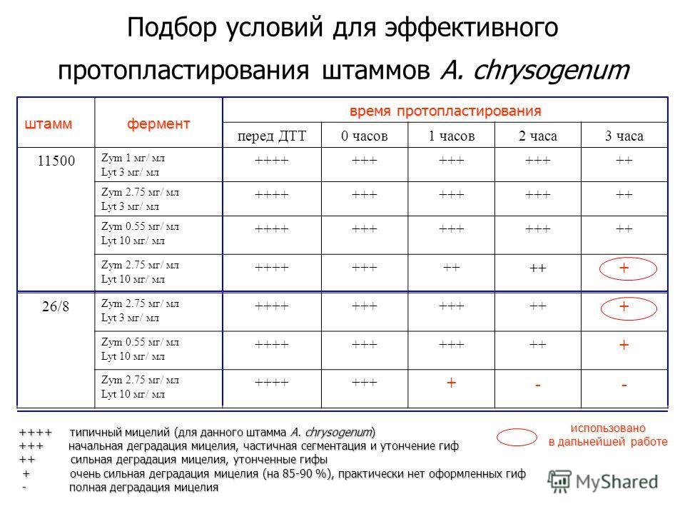 Подбор условий для эффективного протопластирования штаммов A. chrysogenum штаммфермент время протопластирования перед ДТТ0 часов1 часов2 часа3 часа 11500 Zym 1 мг/ мл Lyt 3 мг/ мл +++++++ ++ Zym 2.75 мг/ мл Lyt 3 мг/ мл +++++++ ++ Zym 0.55 мг/ мл Lyt