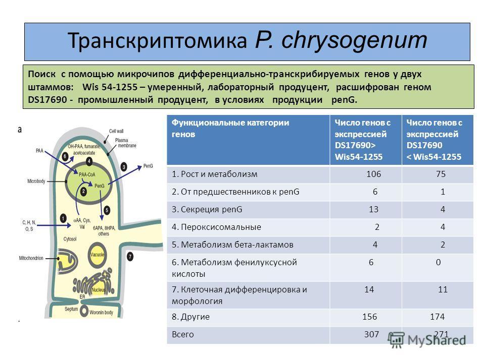 Транскриптомика P. chrysogenum Поиск с помощью микрочипов дифференциально-транскрибируемых генов у двух штаммов: Wis 54-1255 – умеренный, лабораторный продуцент, расшифрован геном DS17690 - промышленный продуцент, в условиях продукции penG. Функциона