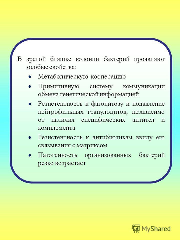 В зрелой бляшке колонии бактерий проявляют особые свойства: Метаболическую кооперацию Примитивную систему коммуникации обмена генетической информацией Резистентность к фагоцитозу и подавление нейтрофильных гранулоцитов, независимо от наличия специфич